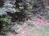Tuin, rodondendrons